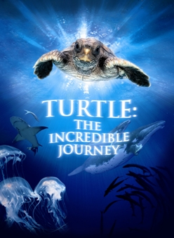 Turtle: The Incredible Journey - Movie Poster #1